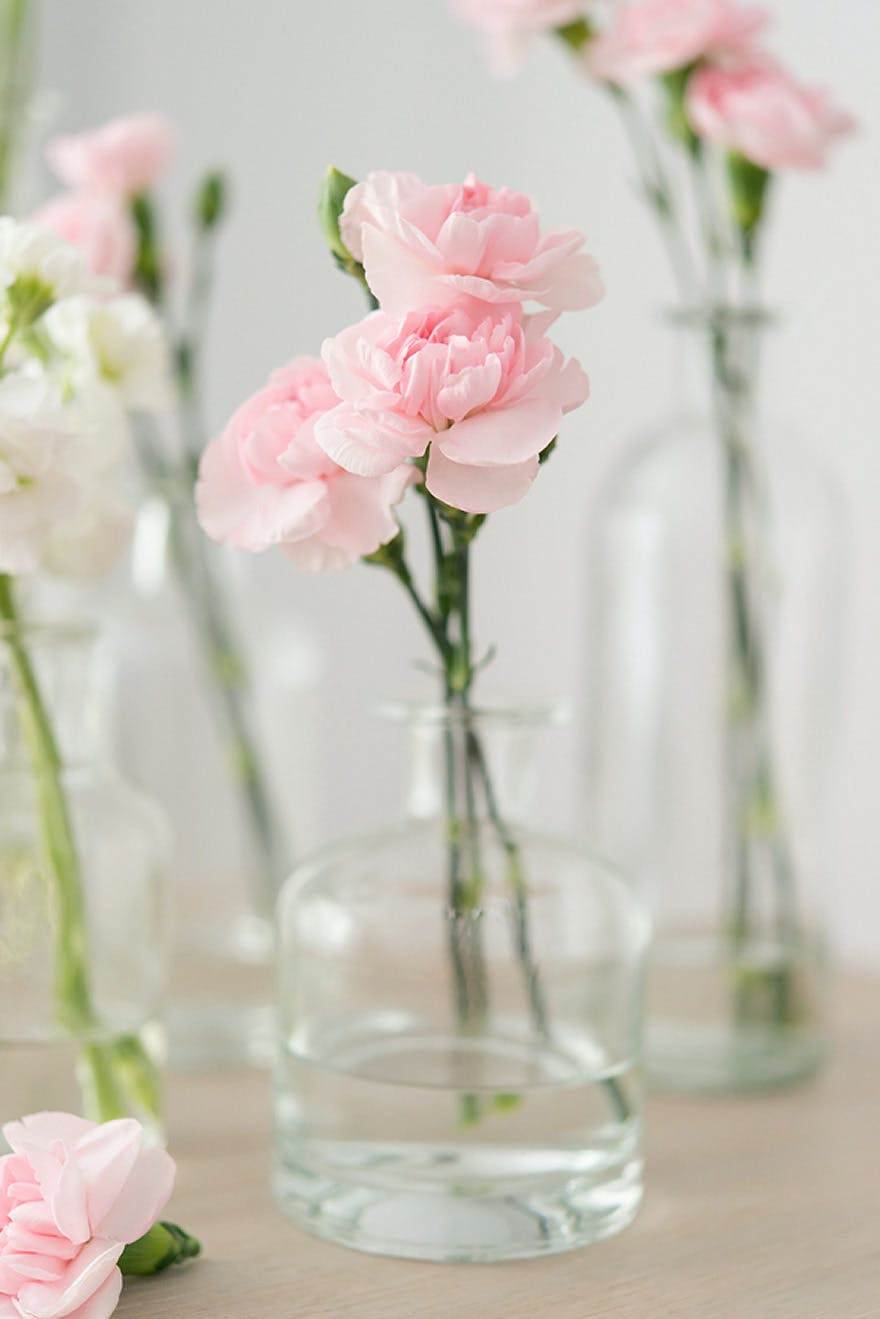 Pink Wedding Carnations | Confetti.co.uk