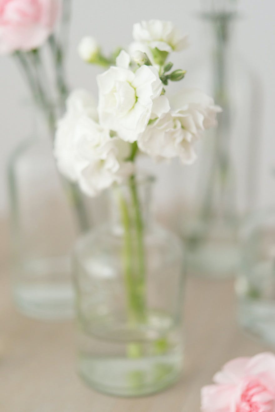White Wedding Carnations | Confetti.co.uk