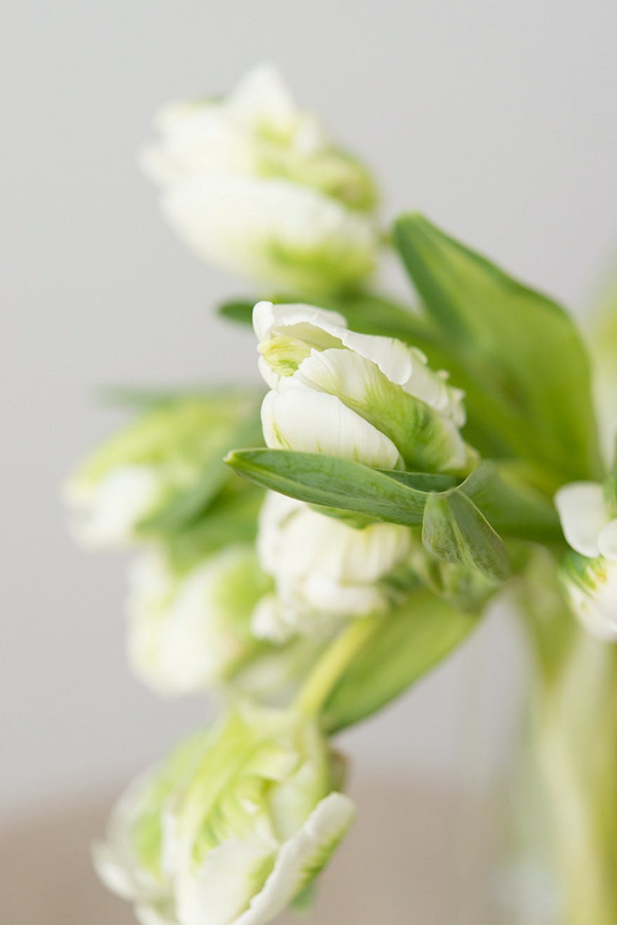White and Green Tulips | Confetti.co.uk