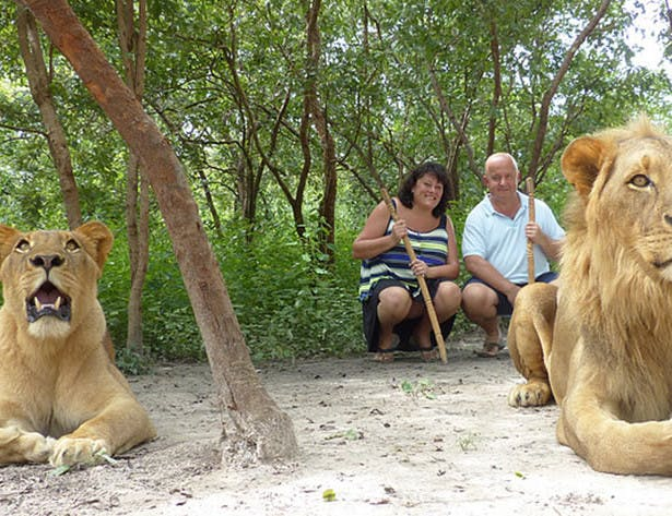 Walking with lions in Gambia