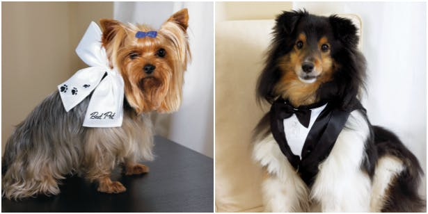 Wedding outfits for dogs | Confetti.co.uk