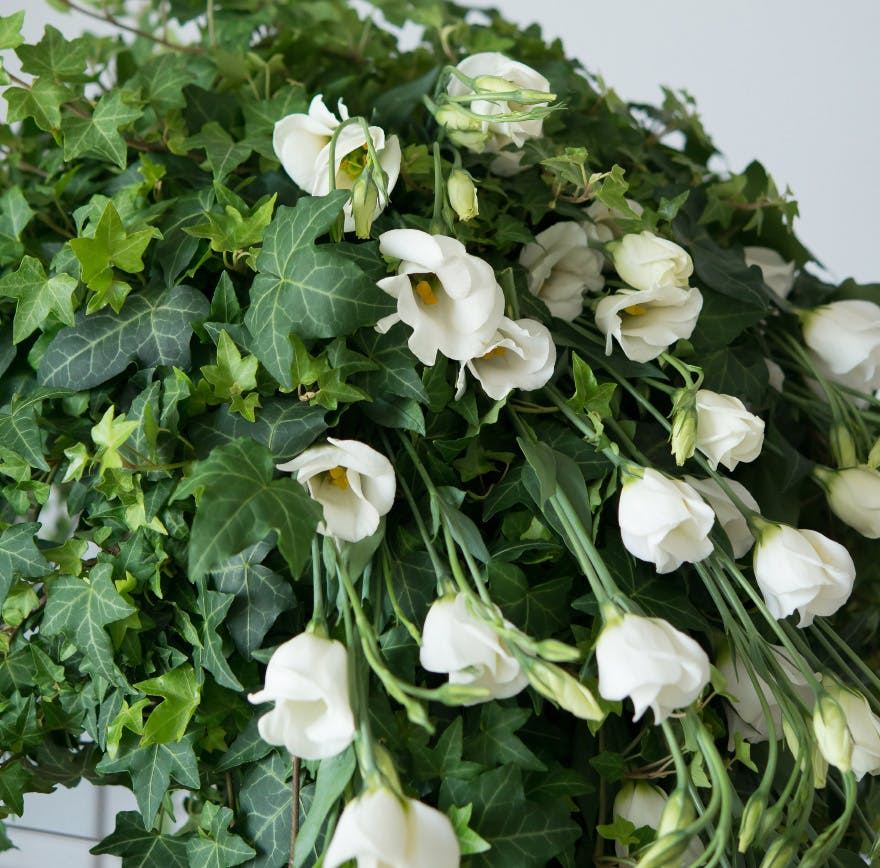 Ivy Plant With Water Picked White Lisianthus | Confetti.co.uk