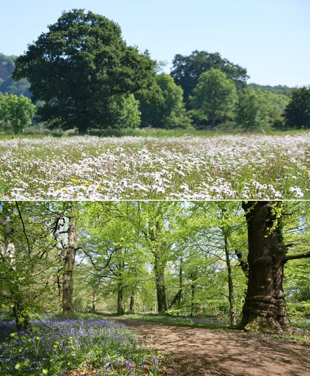 Forest and Meadows by The Woodland Trust | Confetti.co.uk