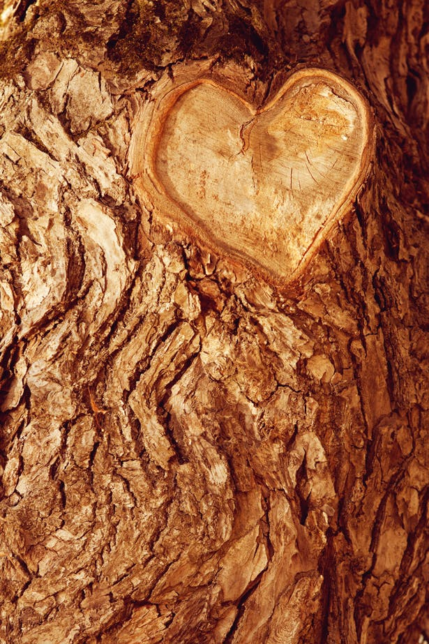 Forrest tree bark with heart engraved by Woodland Trust | Confetti.co.uk
