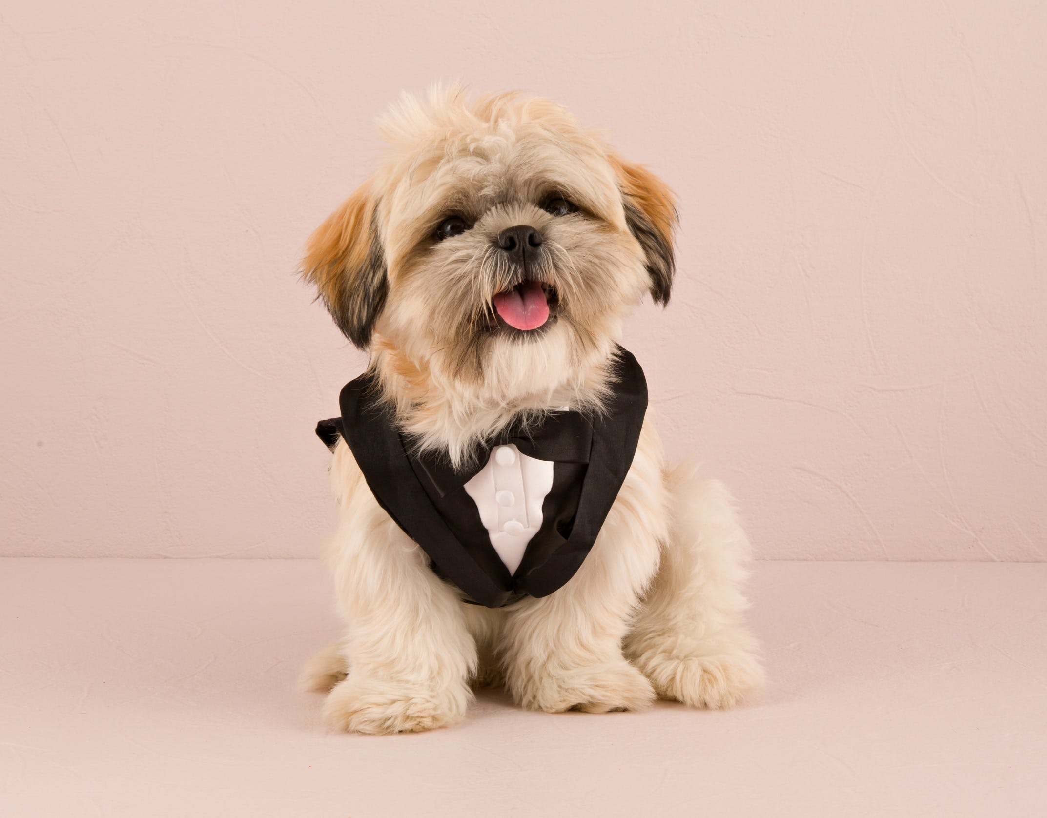 Dog wedding tuxedo | Confetti.co.uk