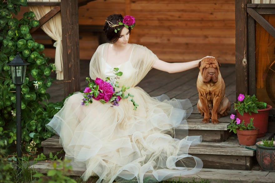 How To Include Your Dog In Your Wedding Day Confetti Co Uk