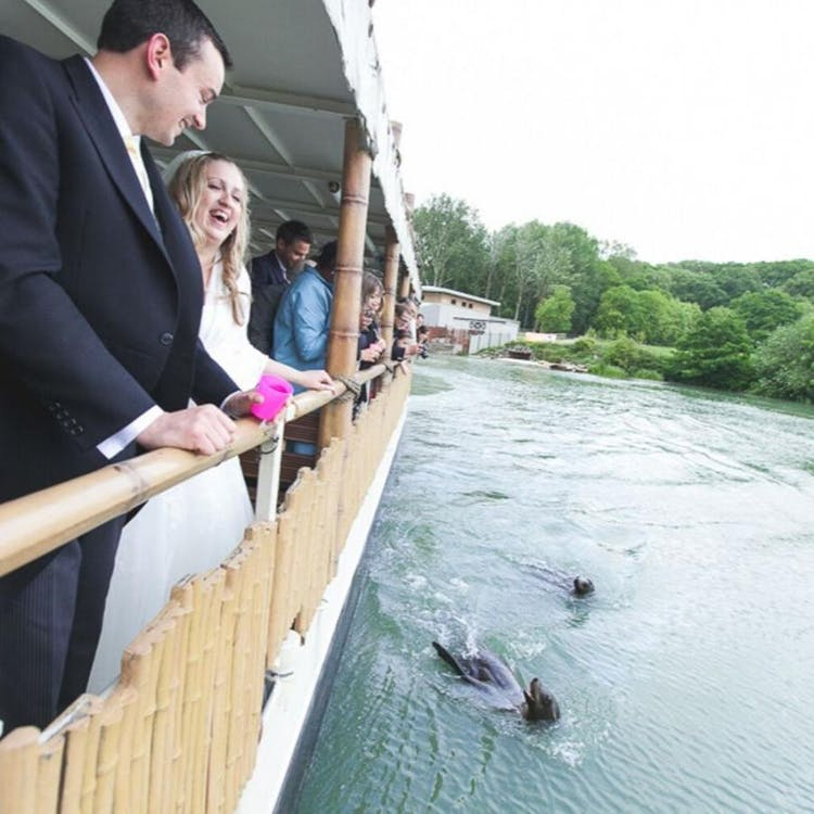 Alternative entertainment - take your guests on a voyage to feed sea lions