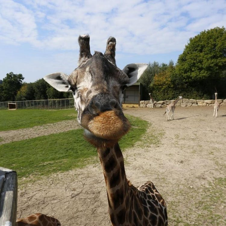 Go on a Safari Bus Tour on your wedding day at Longleat