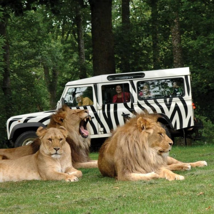 Book a Longleat VIP Experience for yourselves